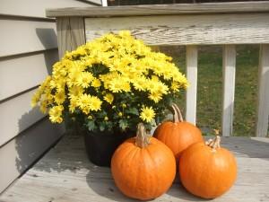 Thanksgiving and Gratitude, Being Grateful at Thanksgiving
